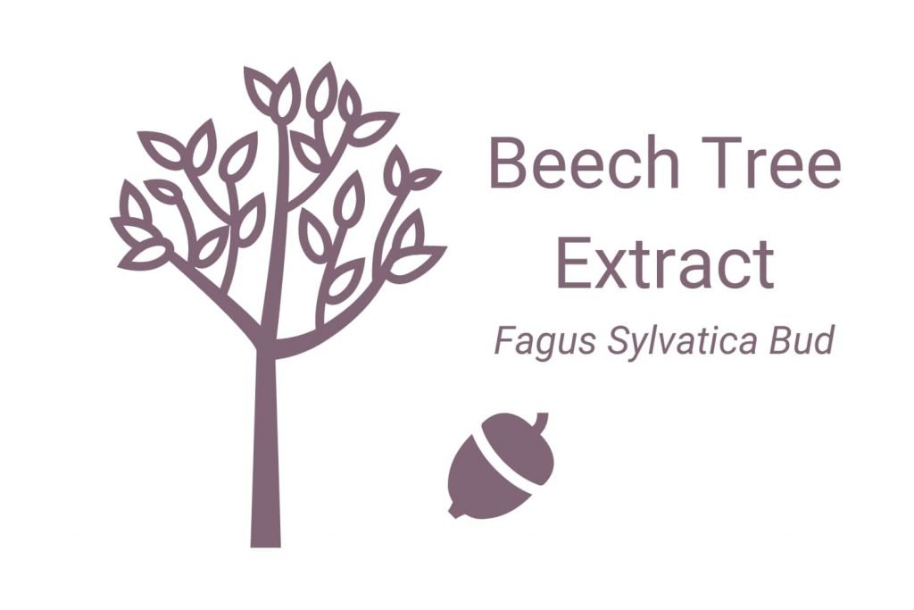 Beech Tree Extract (Fagus Sylvatica Bud)