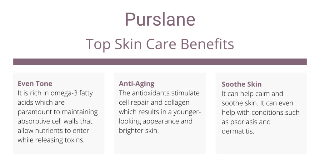 Purslane skincare benefits