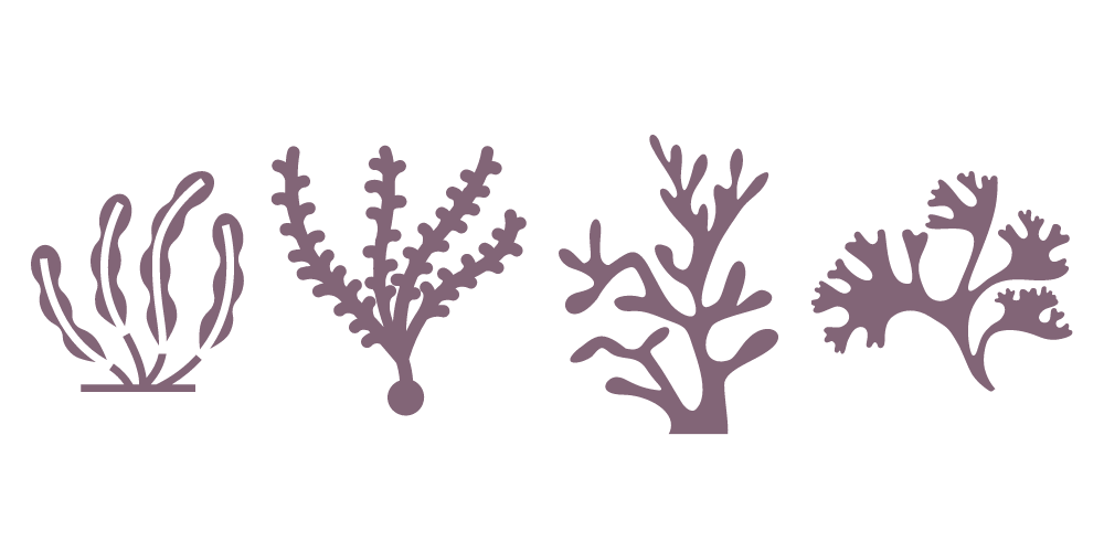 types of seaweed for skin