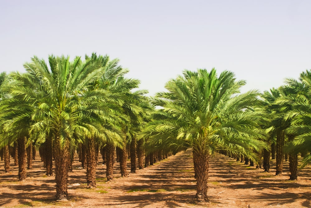 Is Palmitic Acid Bad For The Environment?